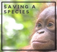 Saving a species with Peter Egan and International Animal Rescue